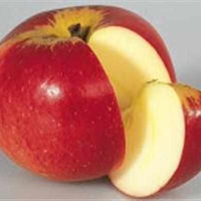 Æble 'Werdenberg Paradis'®  - salgshøjde: 150-200 cm.