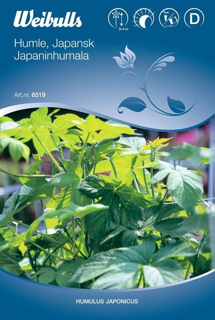 Japansk humle - Humulus japonicus - Frø (W6519)