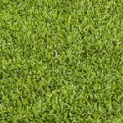 Leptinella dioica (Cotula) - Trædebregne - (16-47 m2) Færdig Bunddække