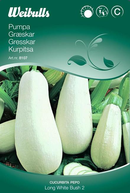 Græskar - Cucurbita pepo - Long White Bush 2 - Frø (W8107)