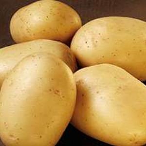 Ballerina - Økologisk Lægge Kartoffel - 2 kg