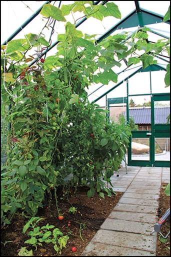 Champost Plantsäck 50 liter