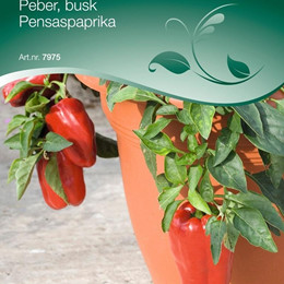 Peber busk - Capsicum annuum - Redskin F1 - Frø (W7975)