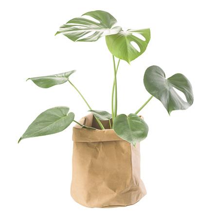 CRÉTON MAISON Plantepose