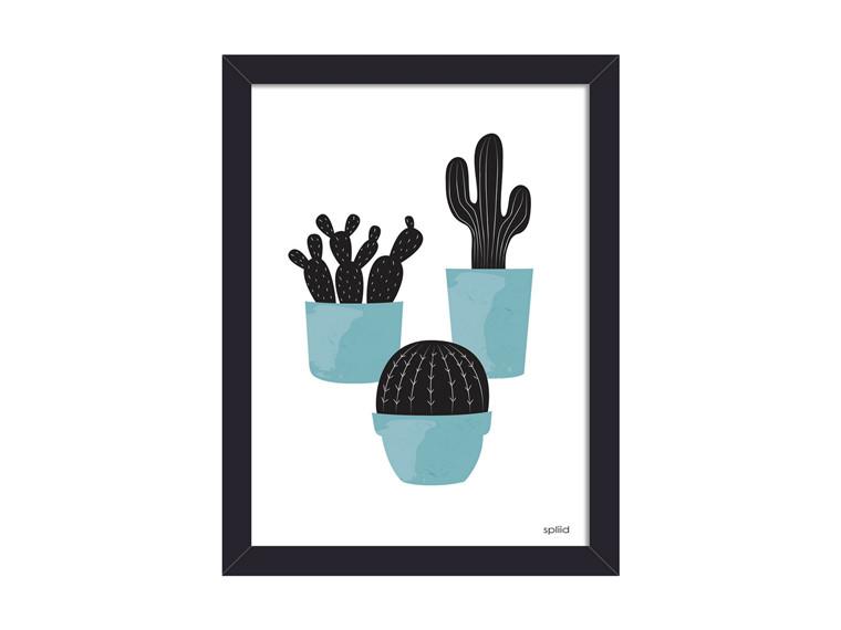 Cactus blue 1
