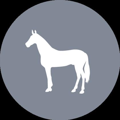 Heste uden sko