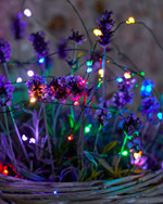 Knirke  3,9 m Fairy Light 40 Leds  Green-Mix