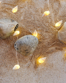 Shelly conch shells  String Light 1,9 m