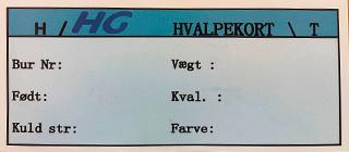HG Karta dla młodych, Niebieska DK 1000 szt/paczka