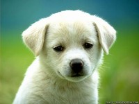 normal_cute-puppy-dog-wallpapers.jpg