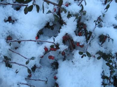 Vinter_p__campingpladsen_006(1).jpg