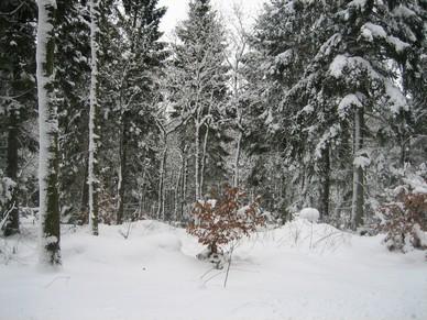 Vinter_p__campingpladsen_022.jpg