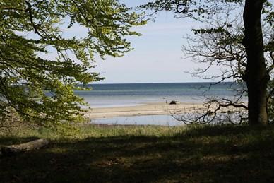 Strandskov1.jpg