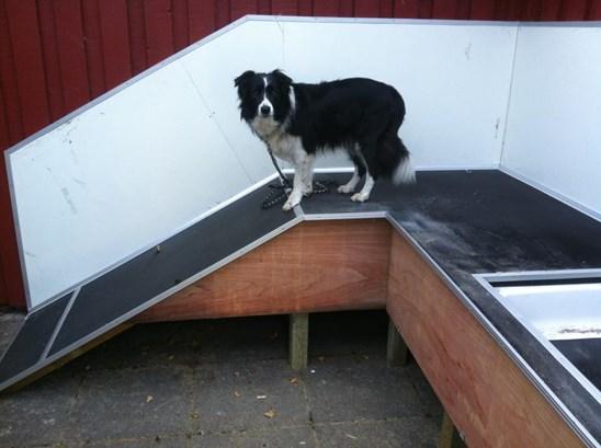 Hundebad(2).jpg